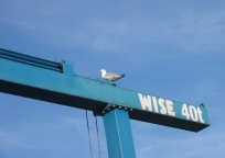 A wise seagull in Ramsgate Harbour